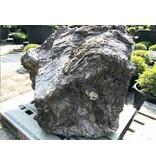 Japanse Sierrots Nagoya 81 cm