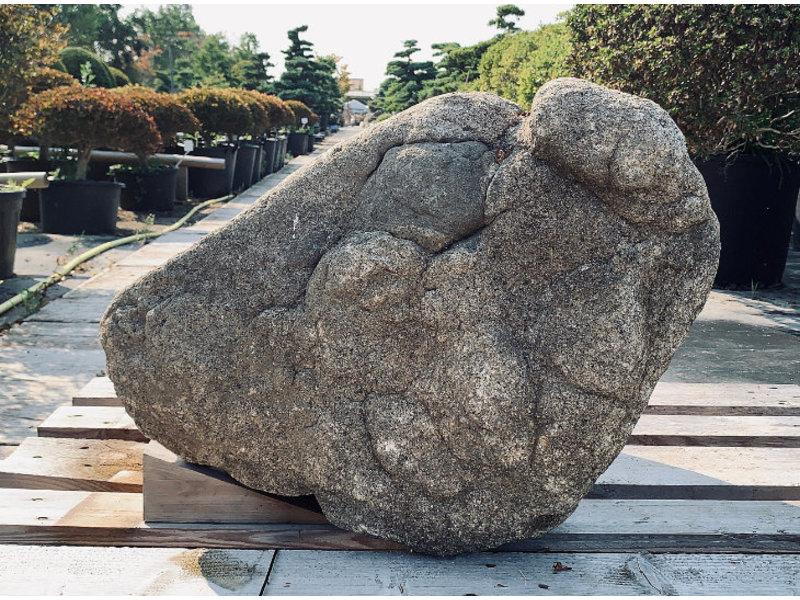 Japanse Sierrots Kikko Seki 50 cm