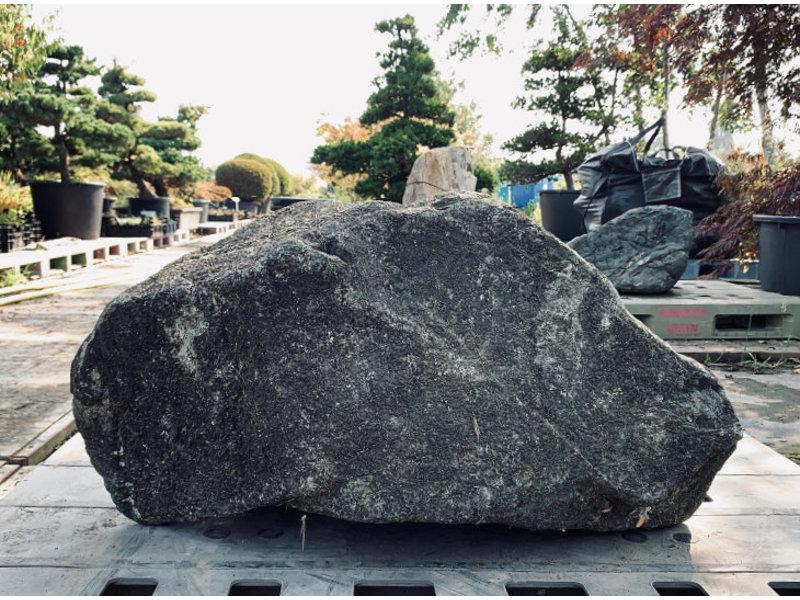 Japanse Sierrots Nagoya 50 cm