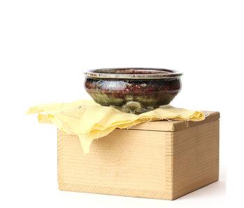 Bonsai Plaza The Webshop For All Your Bonsai And Bonsai Supplies Bonsaiplaza