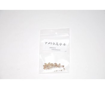 Hanamizuki, graines Cornus