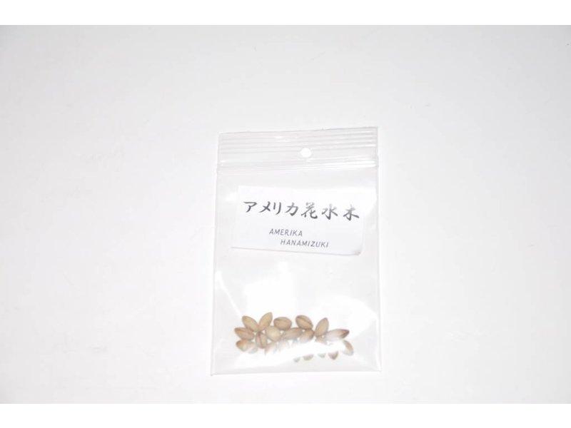 Hanamizuki, Cornus zaden