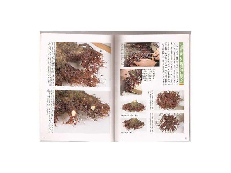 Acer bonsai handboek