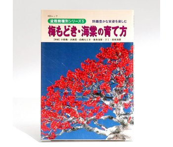 Ilex  bonsai handboek