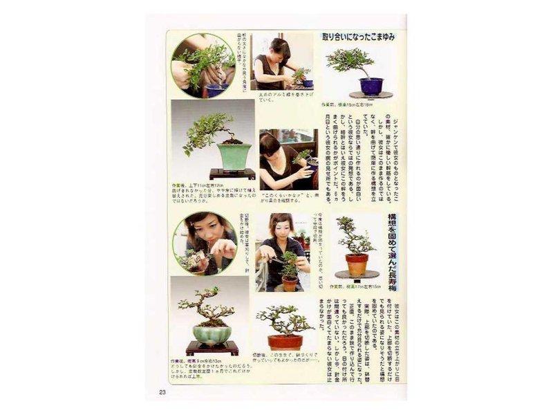 Bonsai Techniques # 3