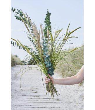 Lene Bjerre Flora grass stem