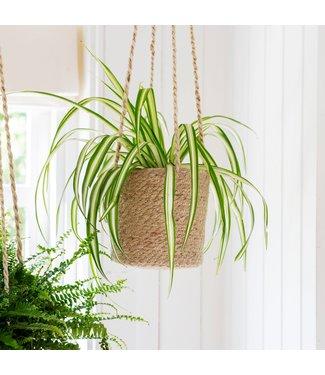 Garden trading Jute hanging plant pot