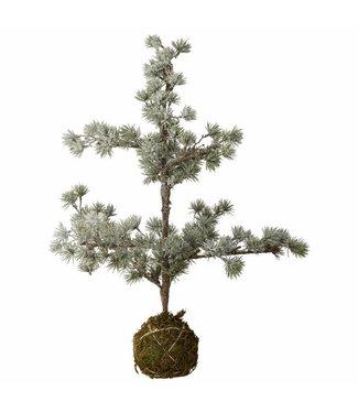 Lene Bjerre Small cedar tree