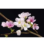 Fotobehang - Cherry Blossoms - Poster XXL - 175 x 115 cm - Multi
