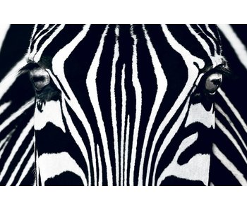 Fotobehang Poster XXL Black & White I 175x115 cm