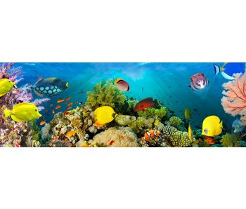 Fotobehang Mer Coraux 366x127 cm