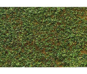 Fotobehang Ivy mur 366x254 cm