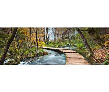 Fotobehang Pfad in den Wald 366x127 cm