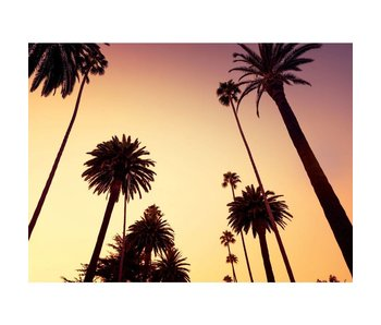 Fotobehang Californie Palm arbres fond d'écran