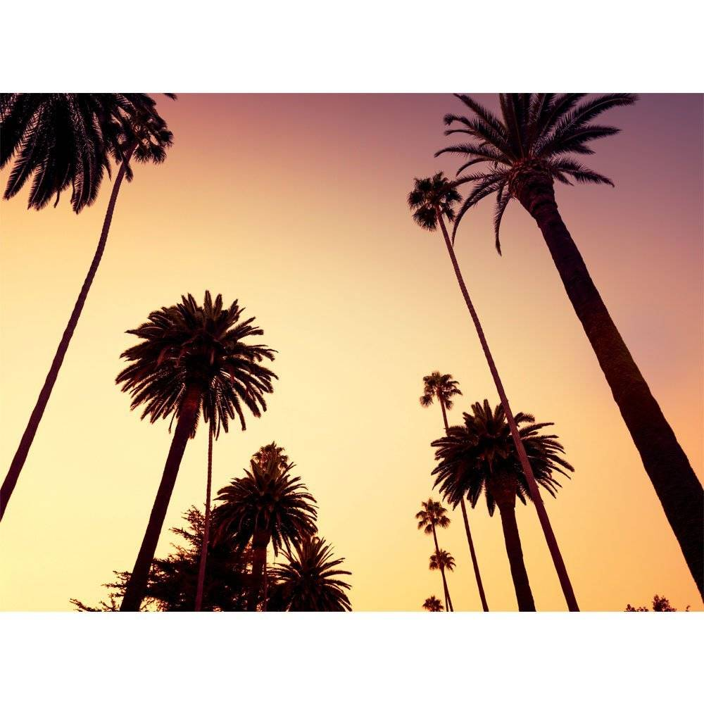 Fotobehang California Palm Trees Wallpaper Simbashop Nl