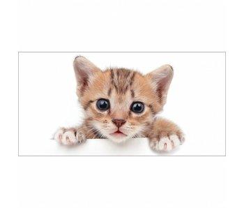 Animal Pictures Strandlaken Kitten 70x140 cm