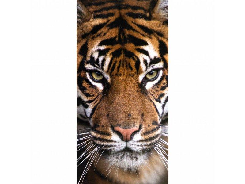 Animal Pictures Tigre - Serviette de plage - 70 x 140 cm - Multi