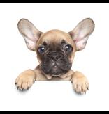 Animal Pictures Couverture en flanelle douce, Puppy Dog - 120 x 150 cm - Blanc