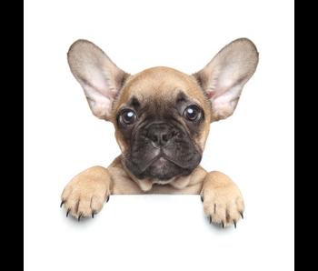 Animal Pictures Couverture de flanelle douce Puppy Dog 120 x 150 cm