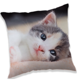 Animal Pictures Chaton - Coussin - 40 x 40 cm - Multi