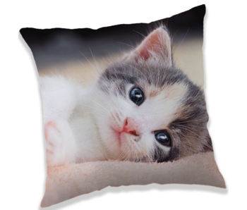 Animal Pictures Cushion kitten 40 x 40 cm