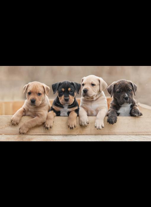 Animal Pictures Beach towel Puppies 70 x 140 cm