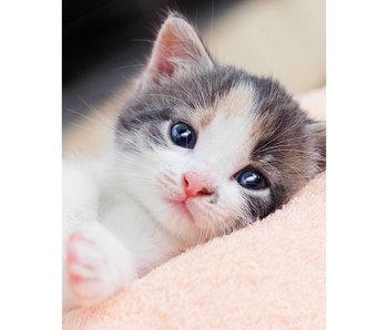 Animal Pictures Fleeceplaid Kitten 120 x 150 cm