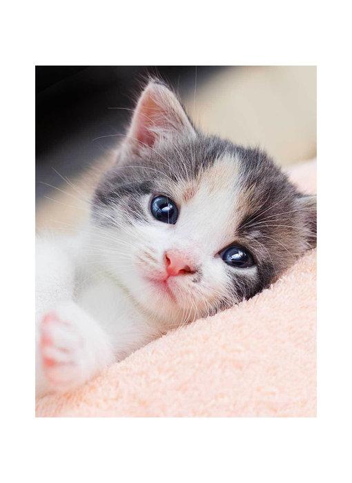 Animal Pictures Fleece plaid Kitten 120 x 150 cm