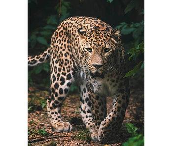 Animal Pictures Fleece plaid Leopard 120 x 150 cm