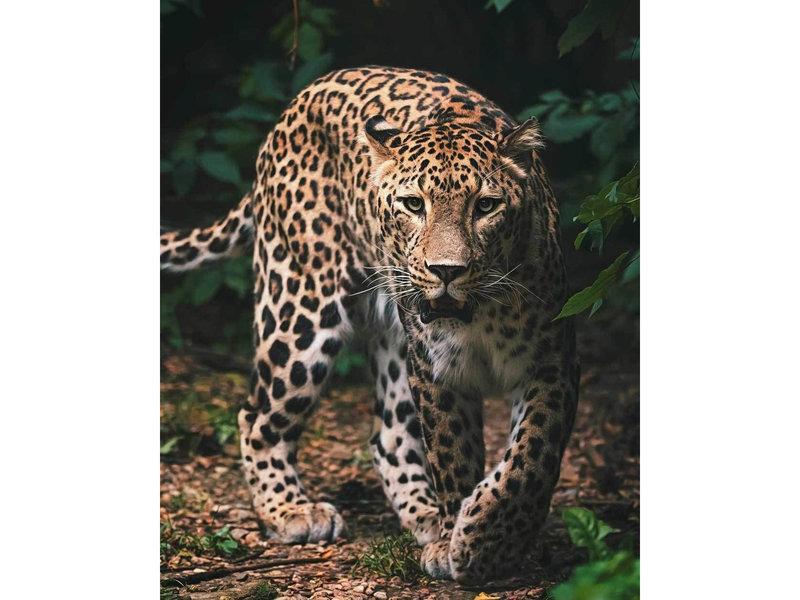 Animal Pictures Fleece plaid Leopard - 120 x 150 cm - Multi