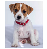 Animal Pictures Fleece plaid Jack Russell Terrier - 120 x 150 cm - White