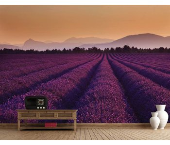 Fotobehang Lavendel 232 x 315 cm