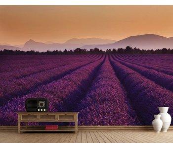 Fotobehang Lavender 232 x 315 cm