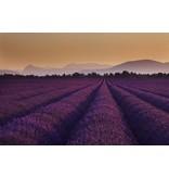 Fotobehang Lavendel - 232 cm x 315 cm - Multi
