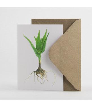 Aloe wenskaart met envelop – Candelabra Aloe