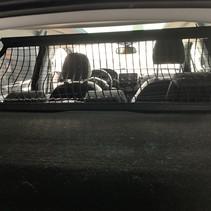 Hondenrek  in de koffer  peugeot 2008