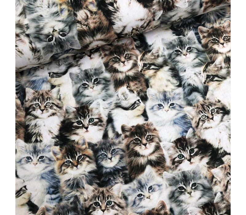 Cotton whistler kittens