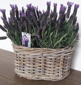 Lavendel in mand