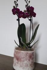 Orchidee in pot Serax