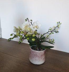 Orchidee in Serax pot