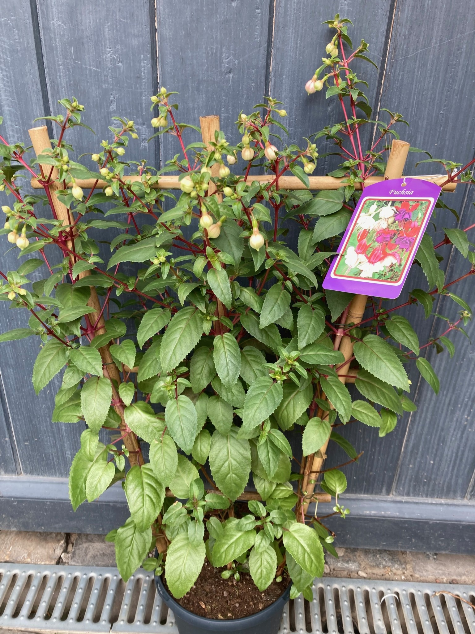 Fuchsia ladder Ø23 cm 80 cm