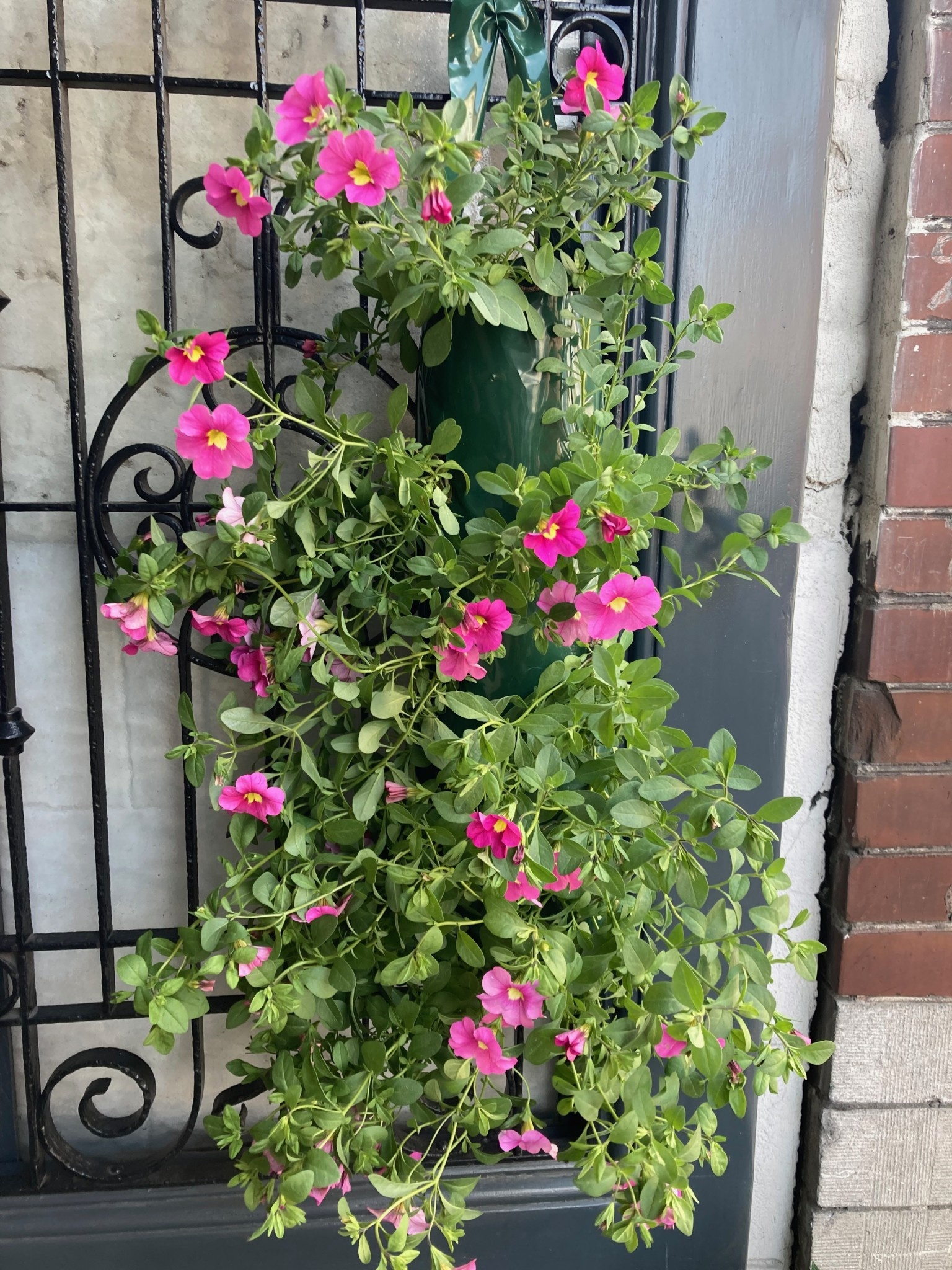 Hangzak Surfinia roze