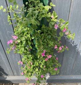 Hangzak Bacopa roze