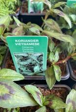 Koriander Vietnamese