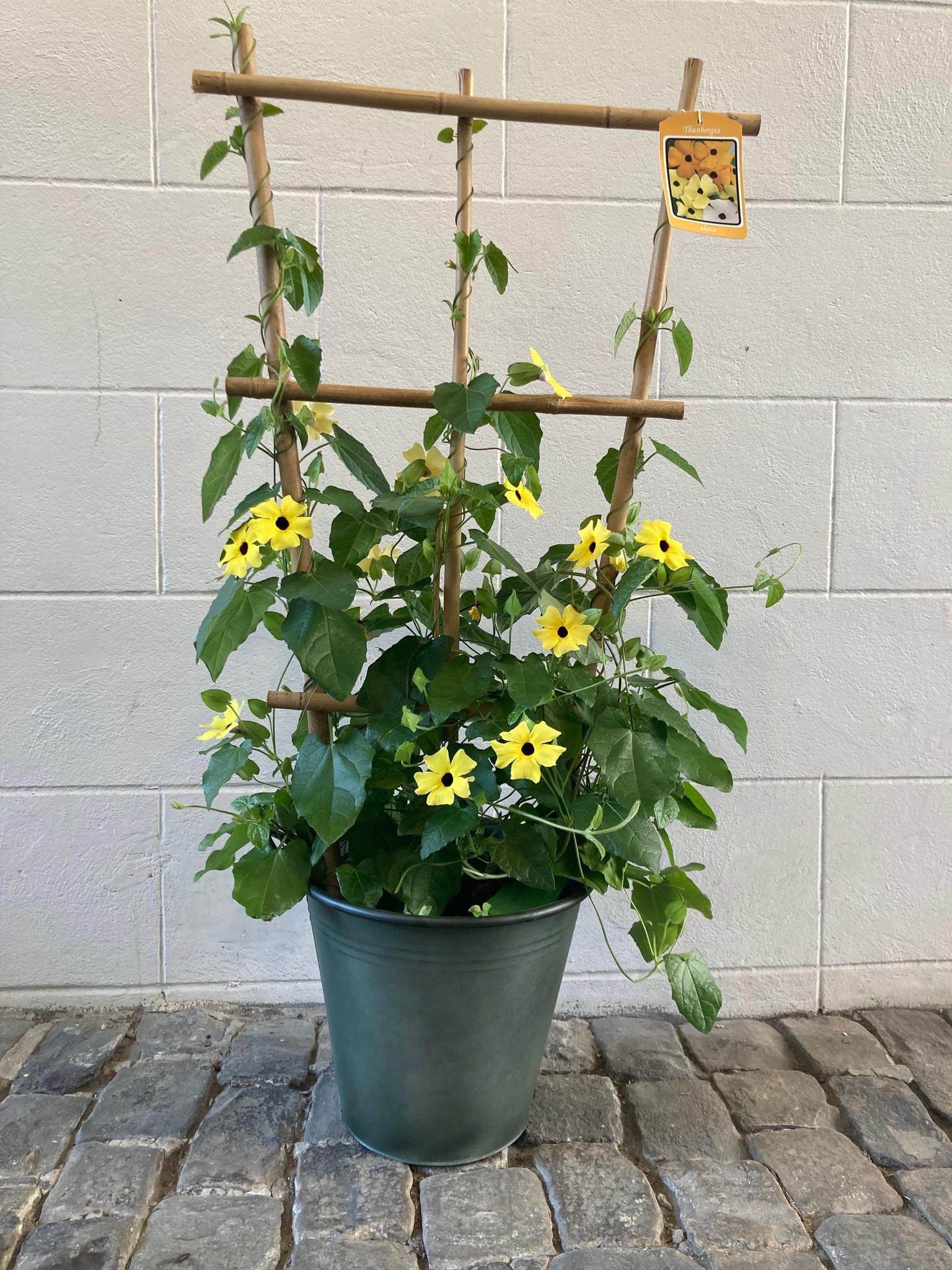 Zink green pot 30x27cm