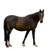 Vers vlees (KVV) voor de hond   Degomeat   Paard mix   1000 gram