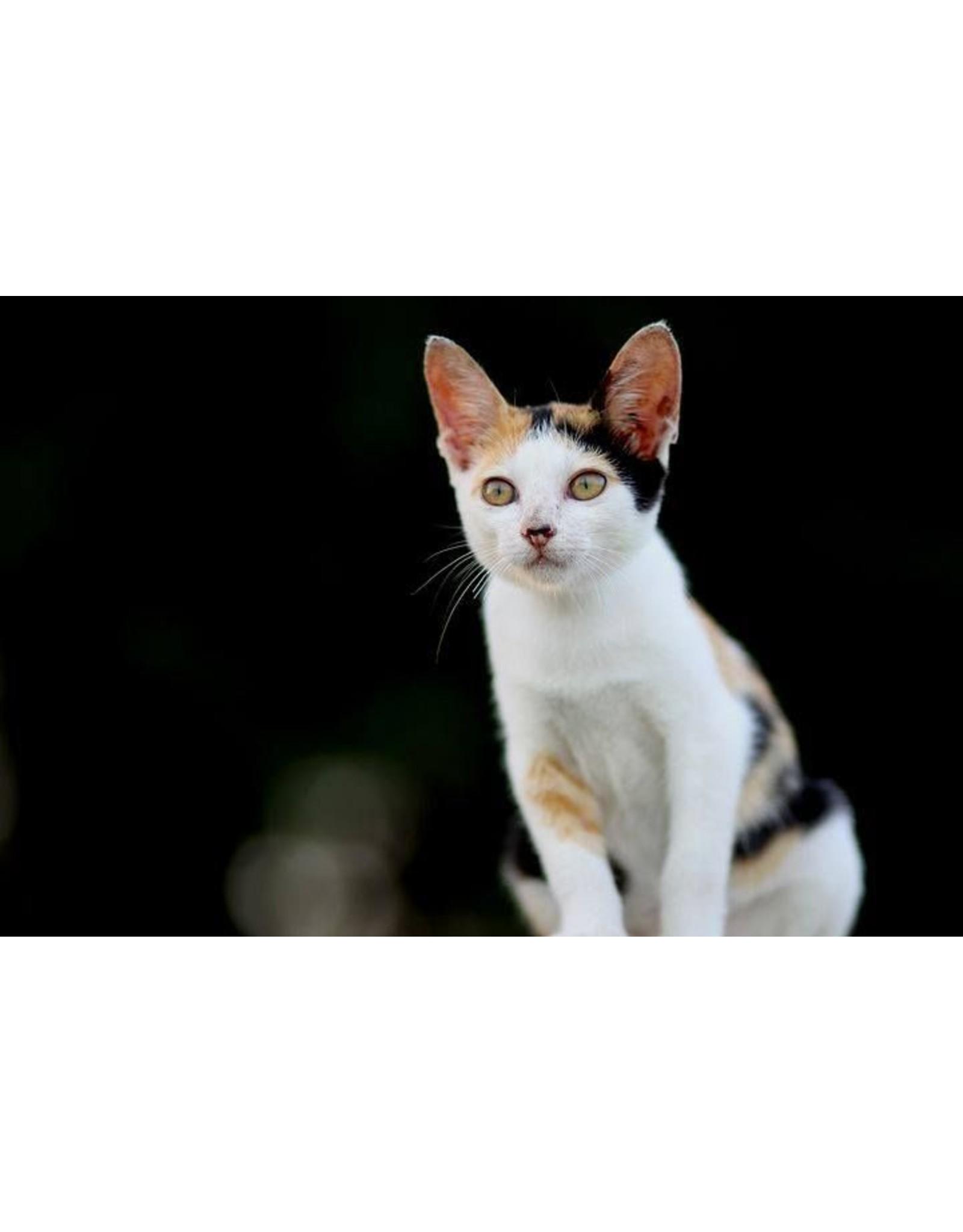 Een uitstekende keuze voor kieskeurige katten en gevoelige katten met allergieën.