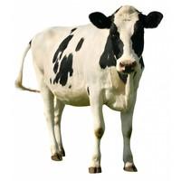 Vlees mix rund compleet 1000gr