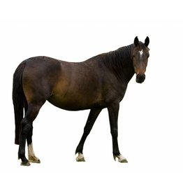 Paard 1000gr