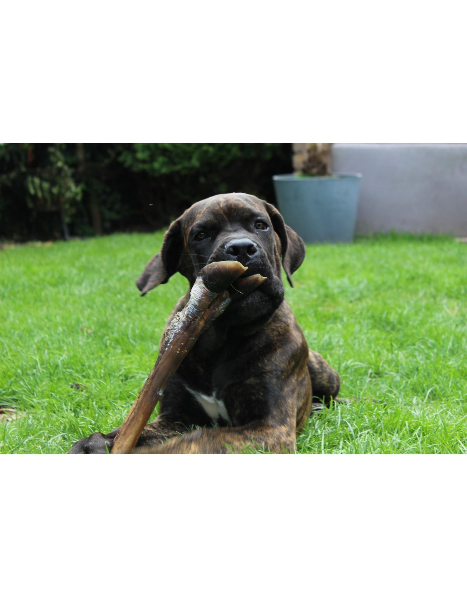 Gedroogde Herten poot met vlees | Stevige kauwsnack voor uren lang plezier!